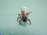 Bug Aerobics