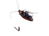 (Almost) Dead Roach & Severed Leg