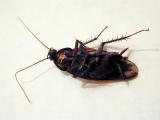 (Almost) Dead Roach