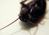 Roach Head