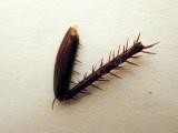 Severed Roach Leg