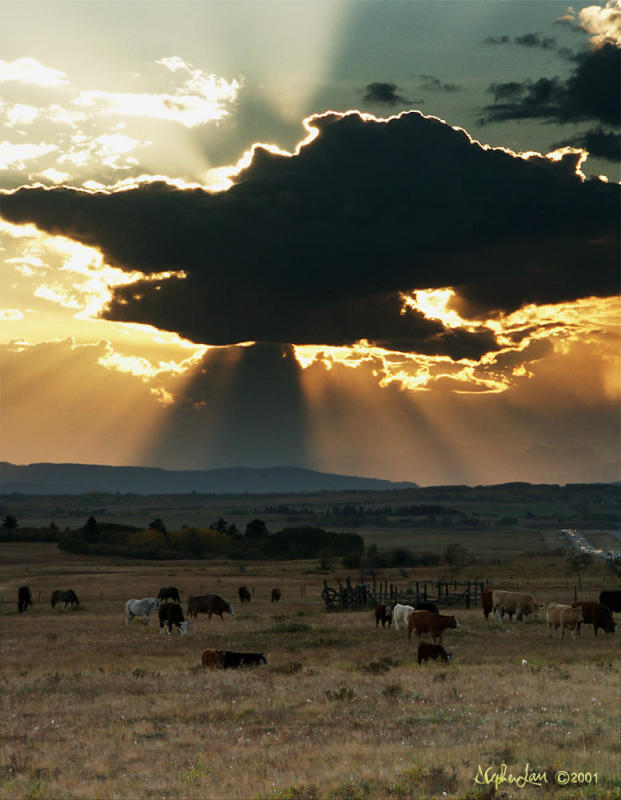 Cloud & Cattle copy.jpg