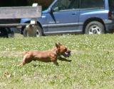 Fast Lil Dog