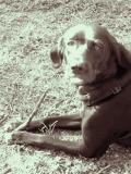 puppy sitting opal
