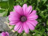 pinkpetalsS.jpg