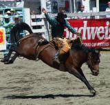 Luxton Rodeo 2003  Victoria, BC  Canada