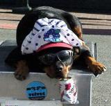 Street dog.jpg