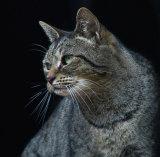 Perfect Cat.jpg