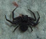 Creepy spider.jpg