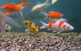 Assorted fish.jpg