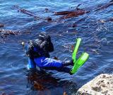 Scuba Diver.jpg