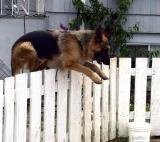 Loves to jump.jpg