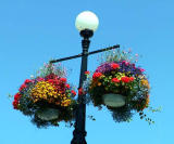 Victoria's hanging baskets.jpg