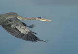 Beauty of flight.jpg