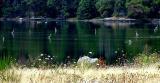 Heron fishing grounds.jpg