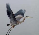 Beauty in flight.jpg