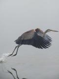 Heron2 .large dl.jpg