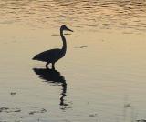 Twilight fishing.jpg
