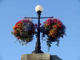 Victoria's flower baskets.jpg