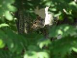 Peeking squirrel.jpg