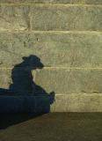 The Sleeping Shadow.jpg