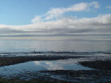 Morning outgoing tide.jpg