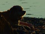 Twight at the beach.jpg