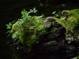 Nurse Log .new plants.jpg