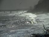 Feeding gulls.stormy pm2.jpg