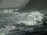 Feeding gulls.stormy pm.jpg