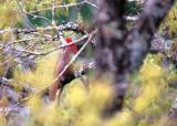 Cardinal thing