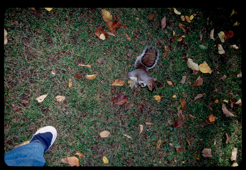 My foot,  Bostons squirrel