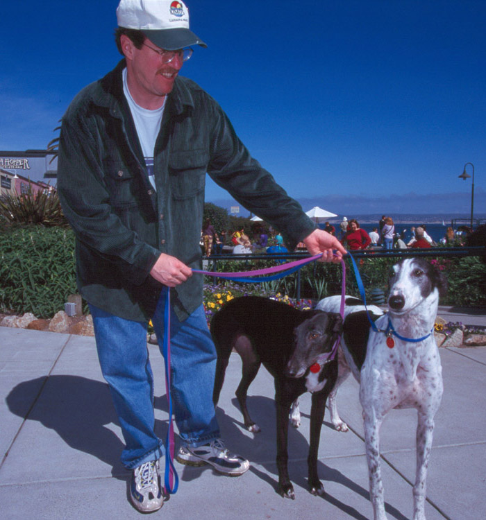 Greyhound peoples in Monterey, California