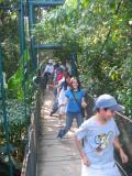 Swinging Bridges