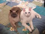 Chloe & Bailey
