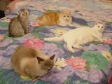 Maggie, Toby, Bailey & Chloe