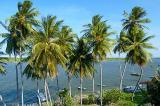 Viçoso coqueiral da praia fluvial do Fortim