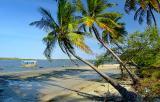 Viçoso coqueiral da praia fluvial do Fortim2