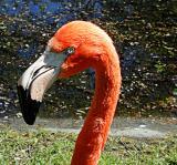 flamingoheadDscn1490.jpg