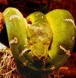 snakeface2.jpg