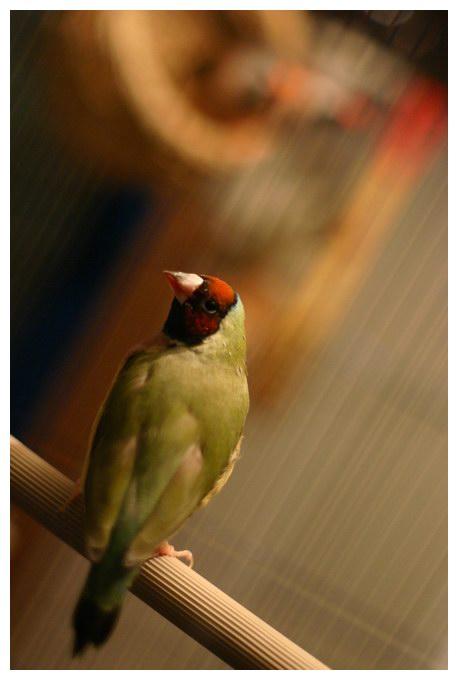 Lonely bird?
