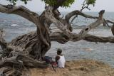 Under the Buttonwood Tree