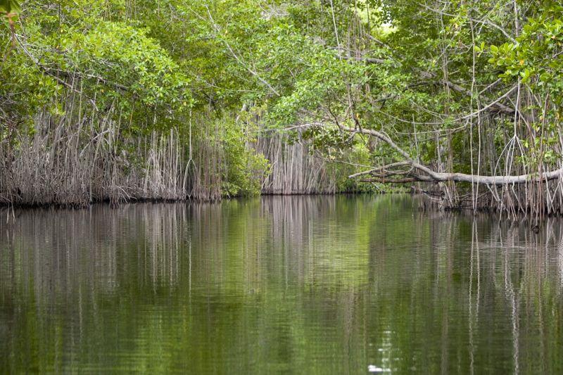 Black River Mangroves