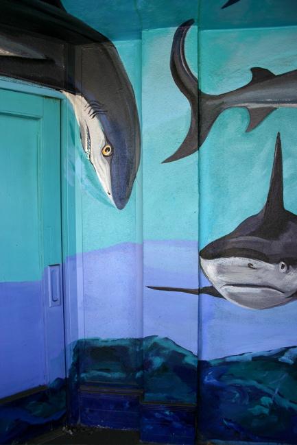 Barrio Sharks 1