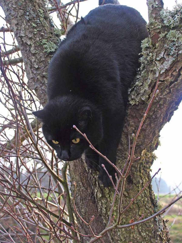 Jasper in another Tree