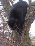 Jasper in another Tree