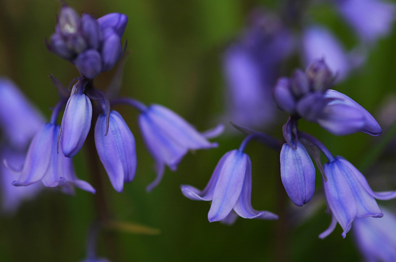 Flower 424