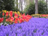 FlowersHolland
