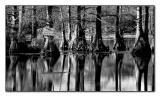 On Jolly Pond(03.30.05)
