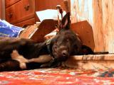 Resting!